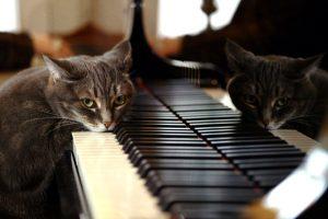 Пианино в дар Жуковский